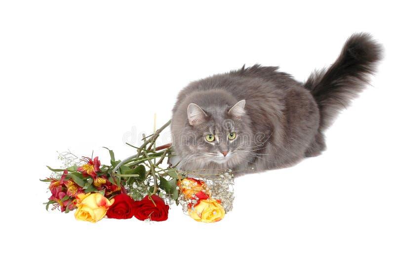 romantiker för 4 katt royaltyfria bilder