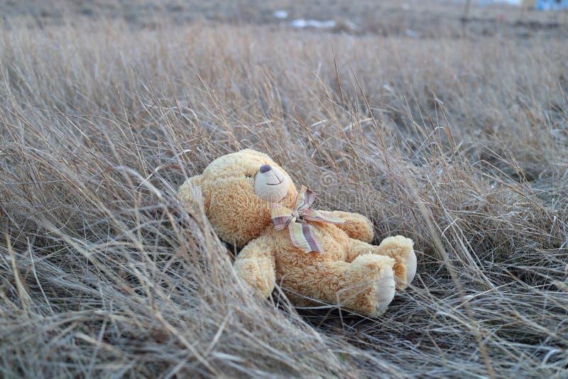 Romantiker för drömmare för nallebjörn royaltyfri bild