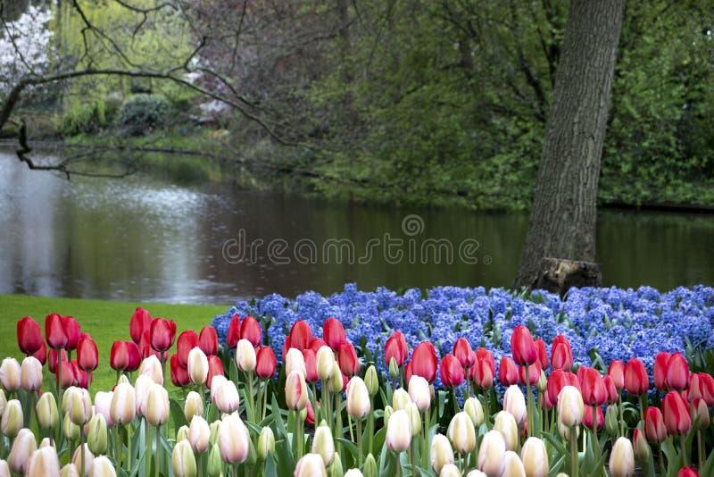 Romantisch landschap met tulpen royalty-vrije stock foto