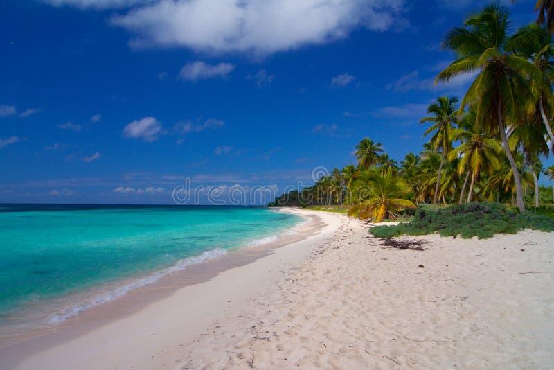 Romantisch strand in de Caraïben met palmen en wit zand stock fotografie