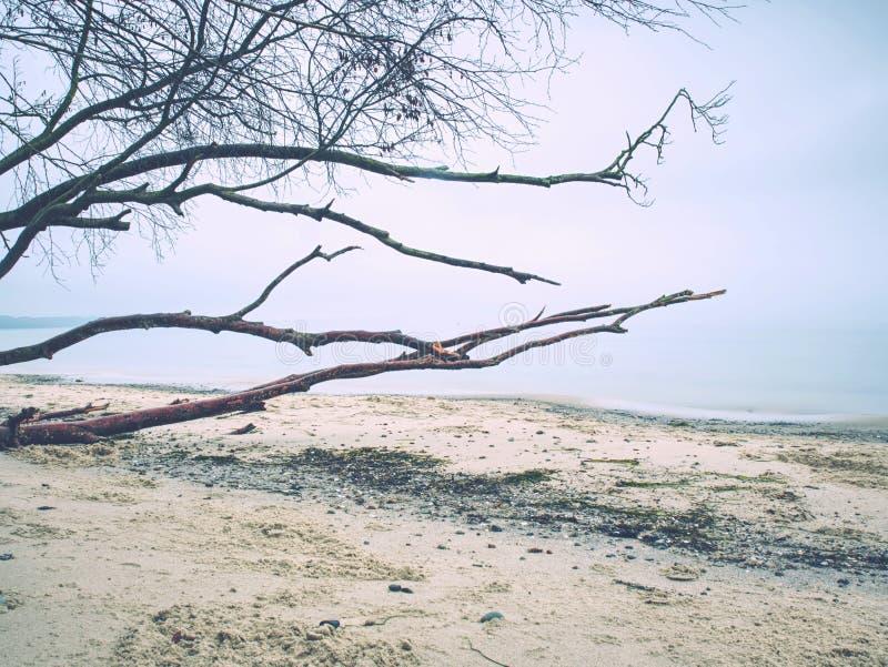 Romantische atmosfeer kleurrijke zonsondergang op zee Steenachtig strand met gebroken boomstam stock fotografie