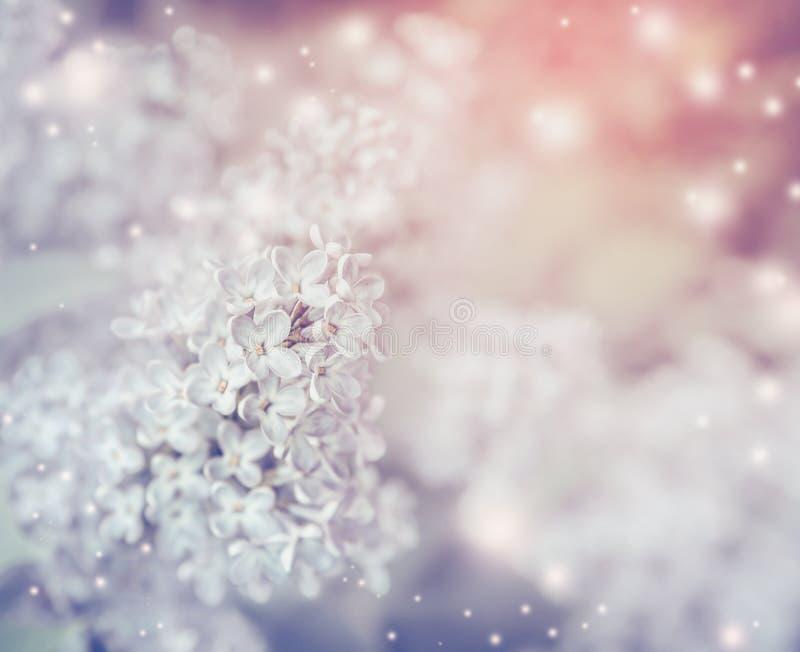 Romantische bloemenaardachtergrond met het lichte lilac bloeien stock foto's