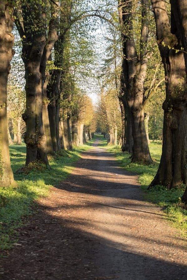 Romantische en geheimzinnige steegweg met oude grote bomen in park stock afbeeldingen