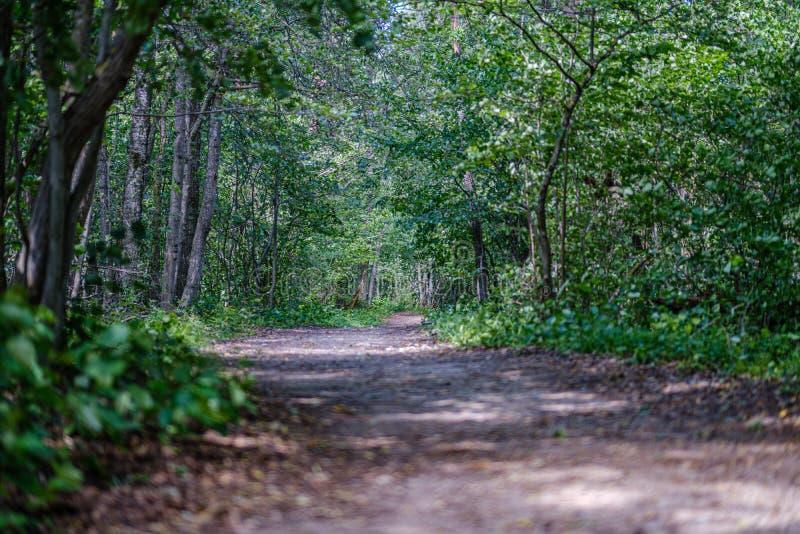 romantische grintlandweg in platteland in de zomer groene avond royalty-vrije stock afbeeldingen