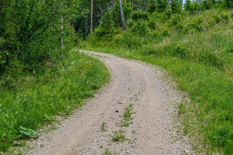 romantische grintlandweg in platteland in de zomer groene avond royalty-vrije stock fotografie