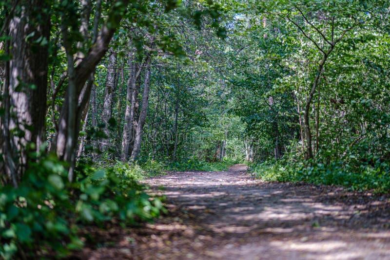 romantische grintlandweg in platteland in de zomer groene avond royalty-vrije stock foto's