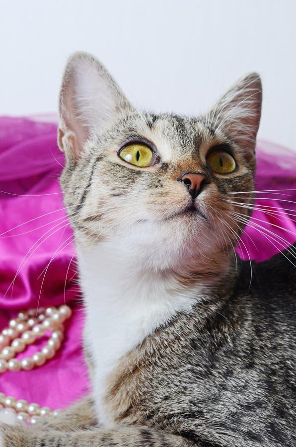 Romantische Katze stockfotografie