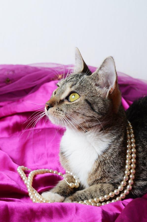Romantische Katze lizenzfreie stockfotografie