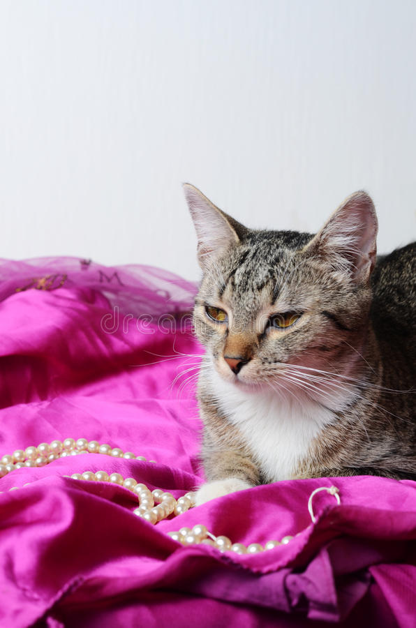 Romantische Katze stockfoto