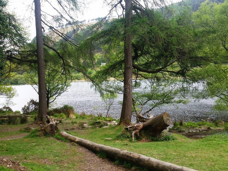 Romantische kreek tussen bomen in de Bergen van Wicklow royalty-vrije stock fotografie