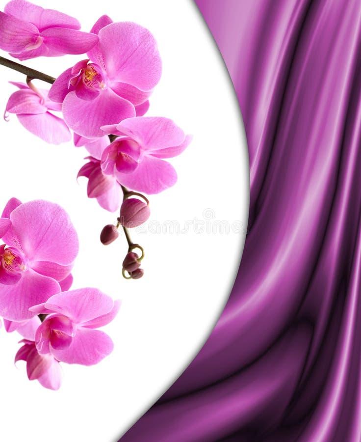 Romantische Orchidee stockfotografie