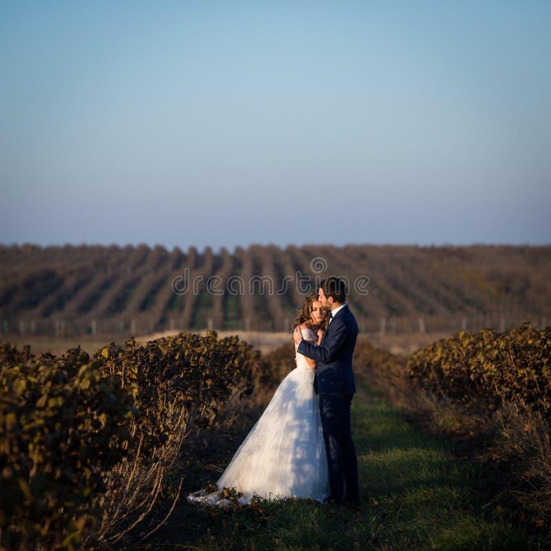 Romantische Paare der Märchen von den Jungvermählten, die bei Sonnenuntergang auf dem Weinberggebiet umarmen stockfotos