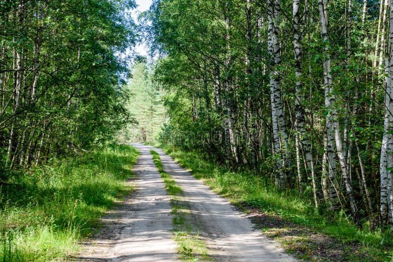 romantische Schotterstraße im grünen Baumwald lizenzfreie stockbilder