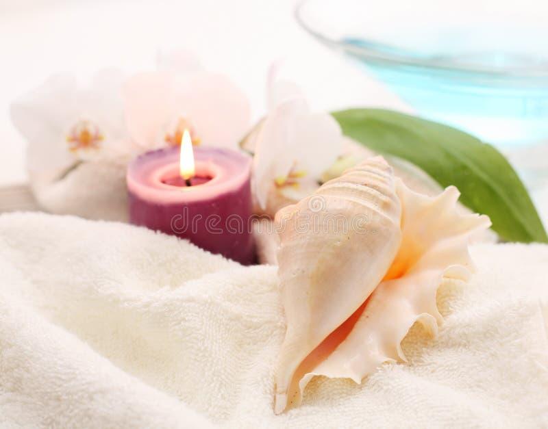 Romantische shell stock afbeeldingen
