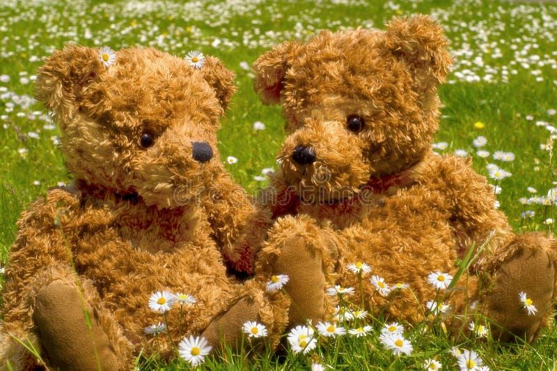 Download Romantische Teddybear Paare Stockfoto - Bild von grün, bären: 864838