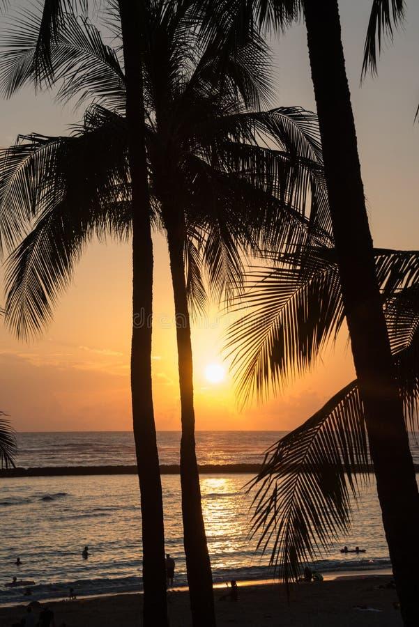 Romantische tropische hawaiische Strand- und Palmen Waikiki silhouettiert bei Sonnenuntergang stockfoto