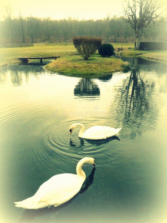 Romantische tuin royalty-vrije stock foto's