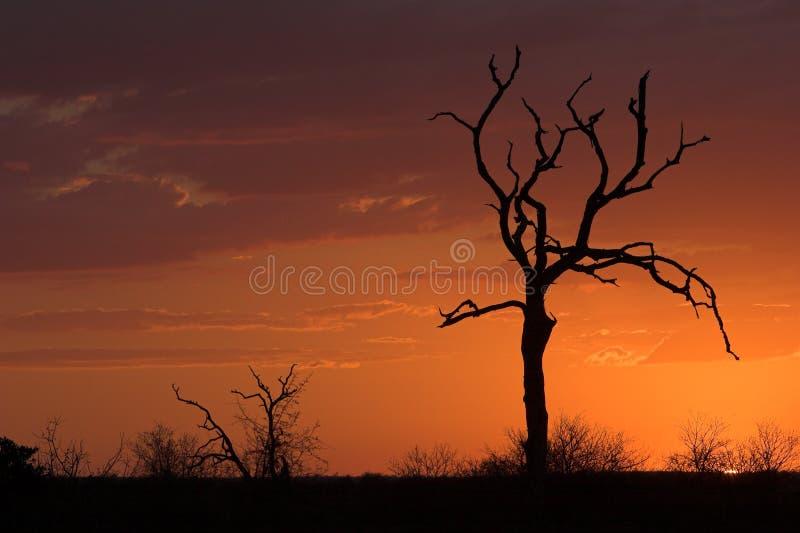 Romantische zonsondergang stock afbeeldingen