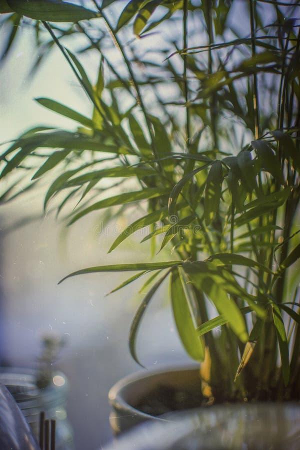 Romantische zonsondergang Palmbladen op mijn venster stock foto's