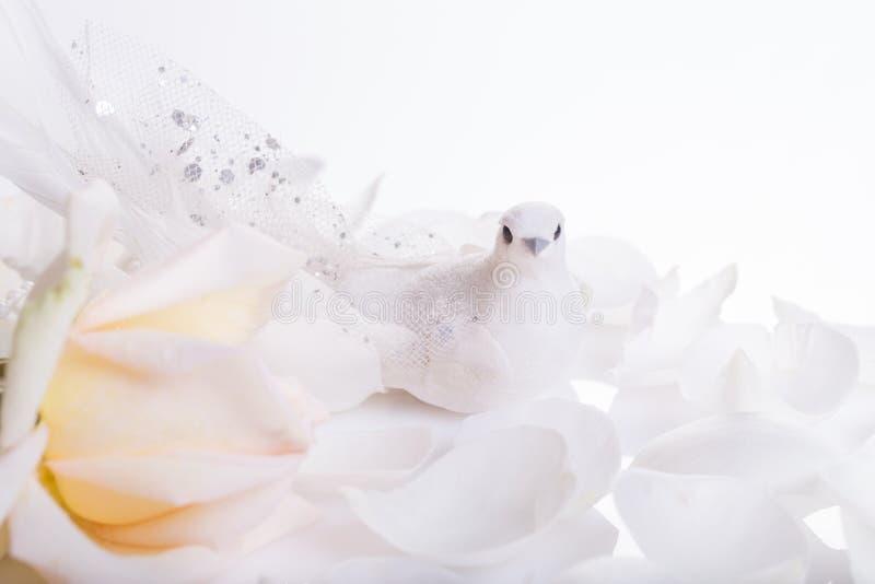 Romantischer Hochzeitshintergrund Wei?e Taube und wei?e Rose, ein Symbol des Friedens und Liebe lizenzfreies stockbild