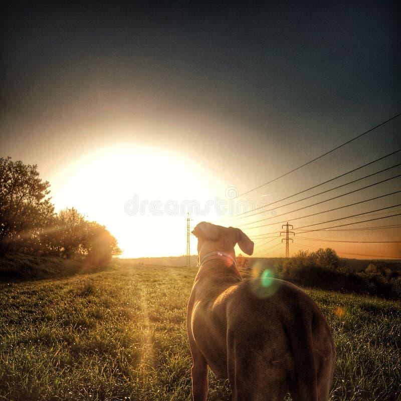 Romantischer Hund - Sonnenuntergang, Natur stockfoto