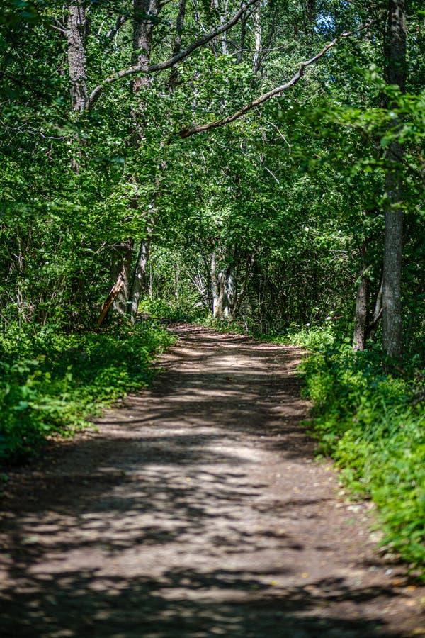 romantischer Kiesschotterweg in der Landschaft am grünen Abend des Sommers lizenzfreie stockfotos