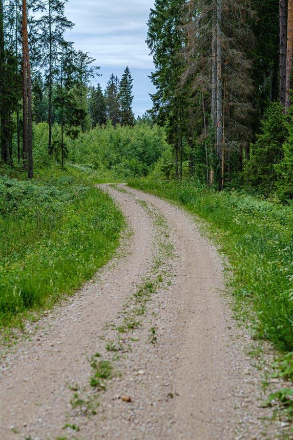 romantischer Kiesschotterweg in der Landschaft am grünen Abend des Sommers stockbilder
