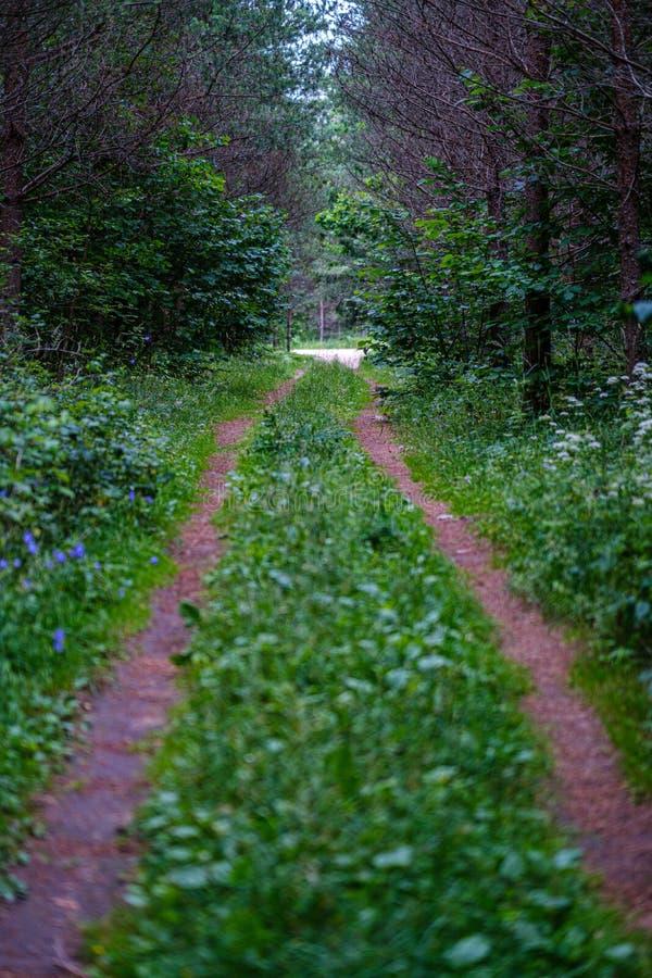 romantischer Kiesschotterweg in der Landschaft am grünen Abend des Sommers lizenzfreie stockbilder