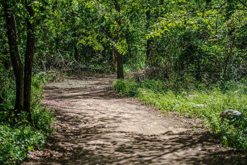 romantischer Kiesschotterweg in der Landschaft am grünen Abend des Sommers stockfotografie