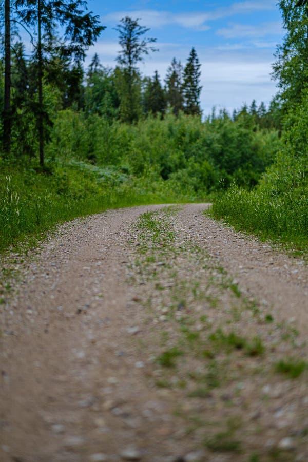 romantischer Kiesschotterweg in der Landschaft am grünen Abend des Sommers lizenzfreie stockfotografie