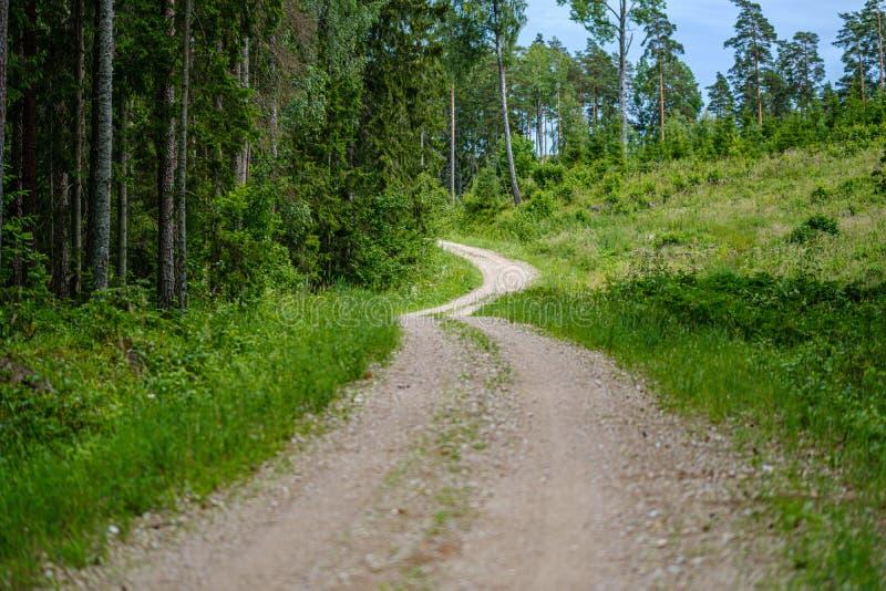 romantischer Kiesschotterweg in der Landschaft am grünen Abend des Sommers stockfoto