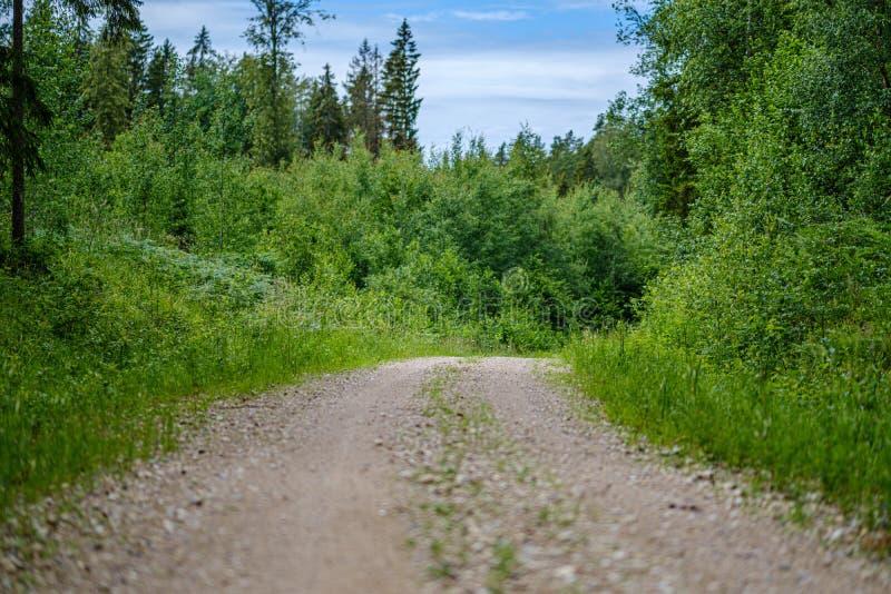 romantischer Kiesschotterweg in der Landschaft am grünen Abend des Sommers lizenzfreies stockfoto