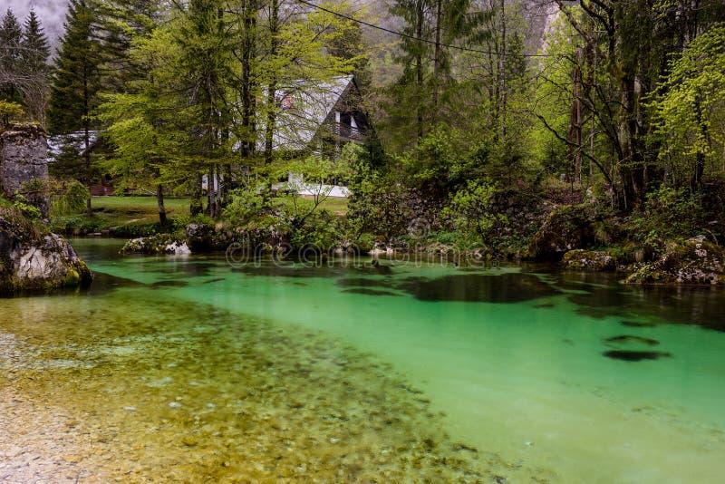 Romantischer Sava Bohinjka-Fluss in Slowenien stockbilder