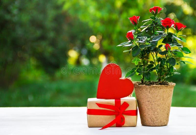 Romantisches Geschenk Rosen im Blumentopf, in der Geschenkbox und im Herzen Internationaler Frauen ` s Tag Sohn gibt der Mama ein lizenzfreie stockfotografie