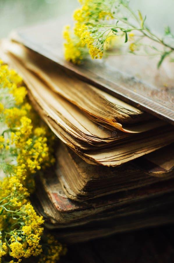 Romantisk bakgrund med kopp te, blommor och öppnar boken över royaltyfri foto