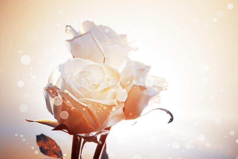 Romantisk Bakgrund Med Tre Vitro Royaltyfri Bild