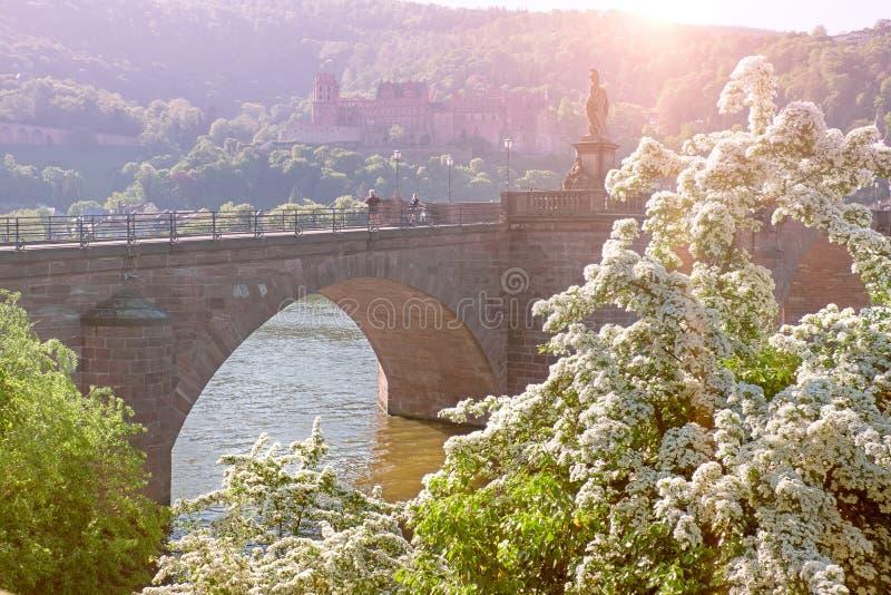 Romantisk bild av den Heidelberg slotten med blommor i foregren royaltyfri bild