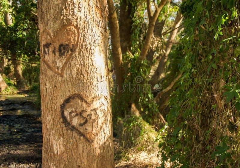 Romantisk etsning i våtmarkerna royaltyfri foto