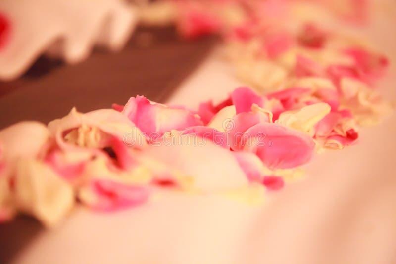 Romantisk garnering för hotellsovruminre, nya rosa och vita Rose Flower Petals som strilas på säng för nygift personpar bröllop arkivbilder