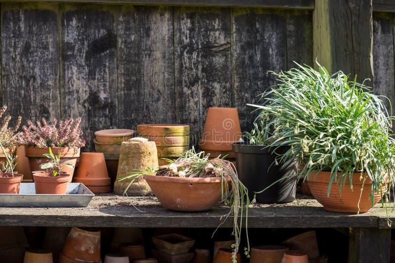 Romantisk idyllisk växttabell i trädgården med gamla retro blomkrukakrukor, trädgårds- hjälpmedel och växter royaltyfri foto