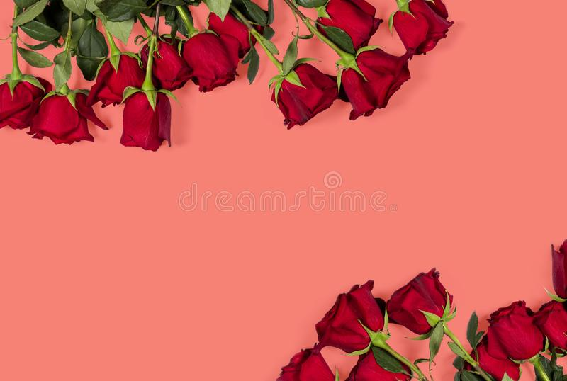 Romantisk modell Blom- ram som göras av härliga stora röda rosor på kulör bakgrund för korall din avståndstext Top beskådar stock illustrationer