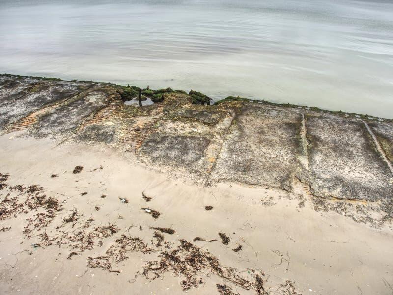 Romantisk morgon Vridet träd ovanför havet arkivfoto