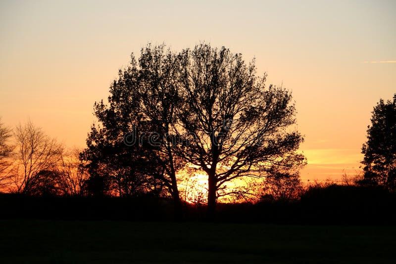 Romantisk soluppgång bak ett stort träd royaltyfria bilder