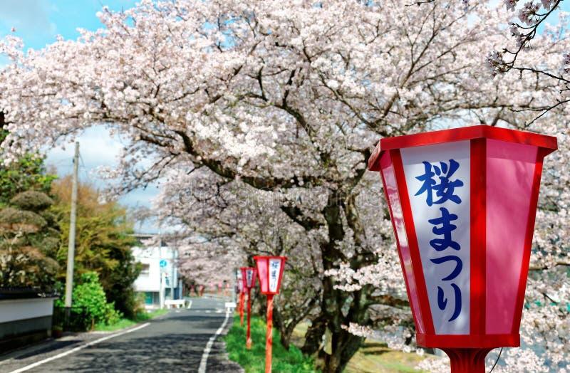 Romantisk valvgång av rosa blomningar för körsbärsrött träd (Sakura Namiki) och lampstolpar för japansk stil längs en landsväg royaltyfria foton