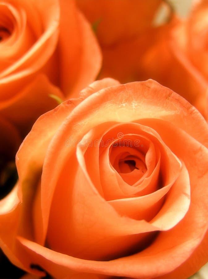romantiska bukettbrudar royaltyfria bilder