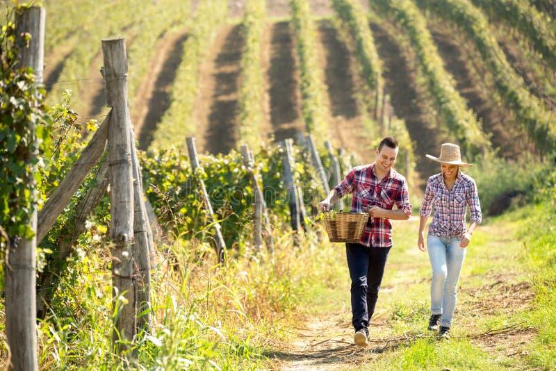 Romantiska par som går till och med vingård royaltyfria foton