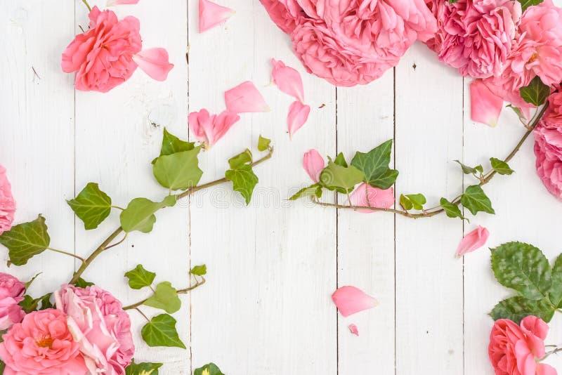 Romantiska rosa rosor och filialer av murgrönan på vit träbakgrund arkivfoton