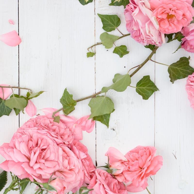 Romantiska rosa rosor och filialer av murgrönan på vit träbakgrund royaltyfria bilder