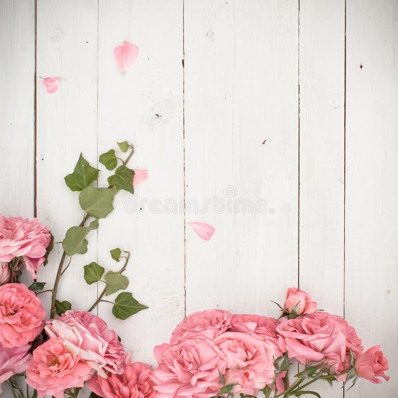 Romantiska rosa rosor och filialer av murgrönan på vit träbakgrund arkivbilder