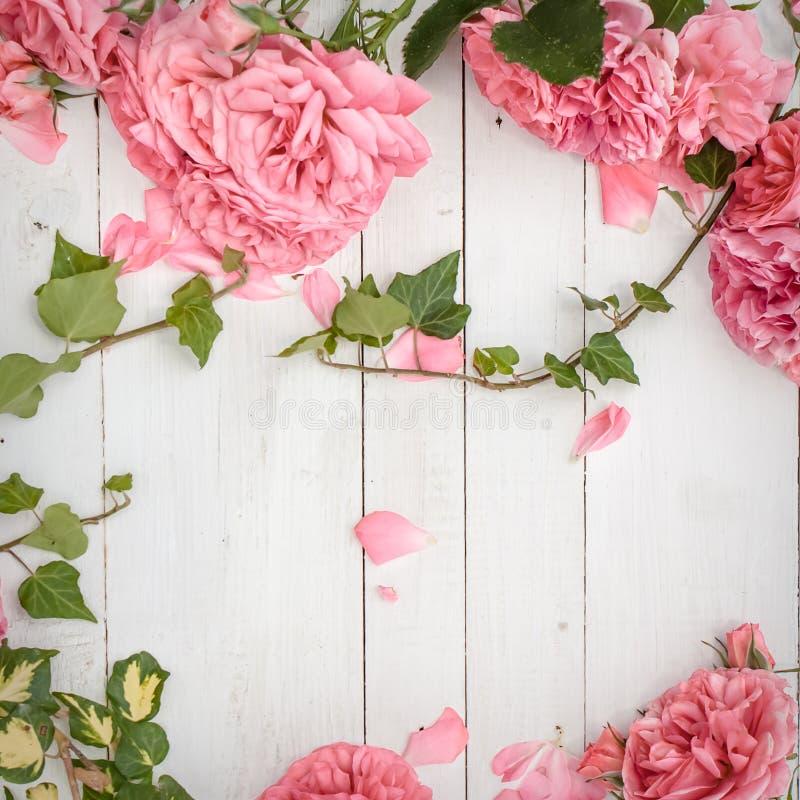 Romantiska rosa rosor och filialer av murgrönan på vit träbakgrund royaltyfri bild